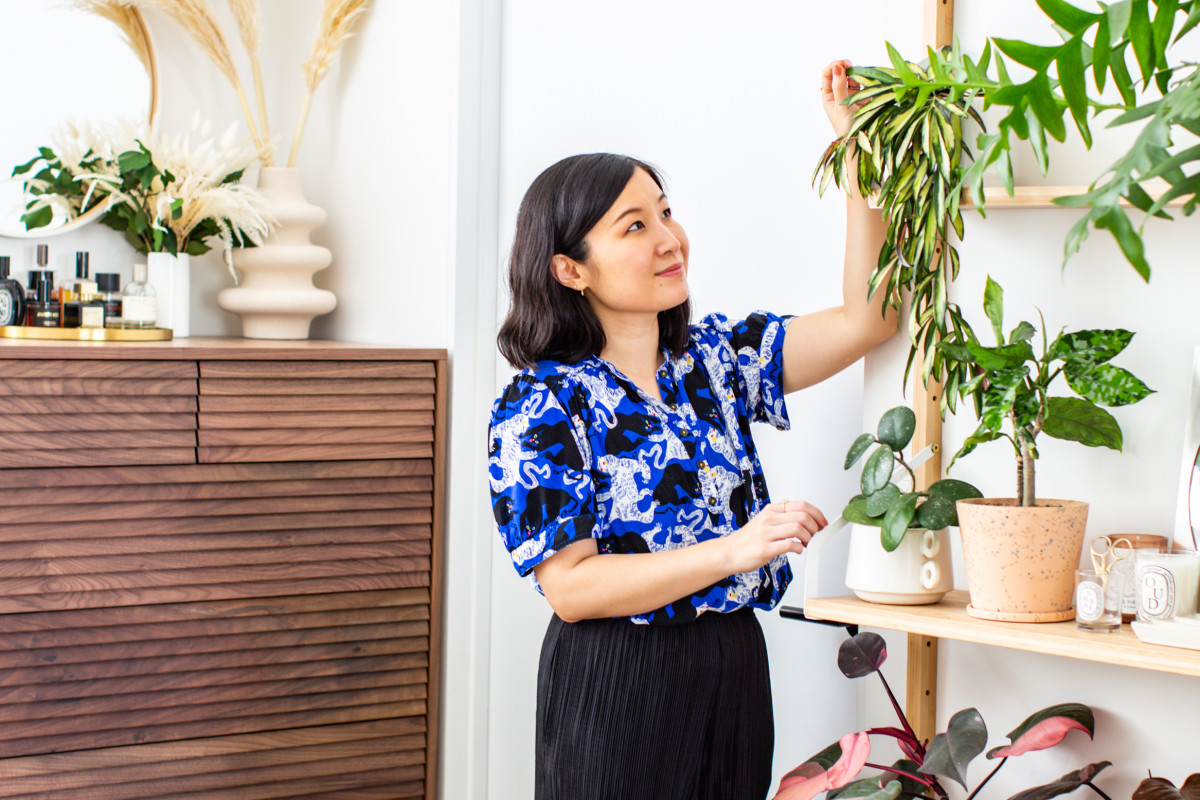 8 Things I Wish I Knew Before Becoming a Parent of 100+ Plants