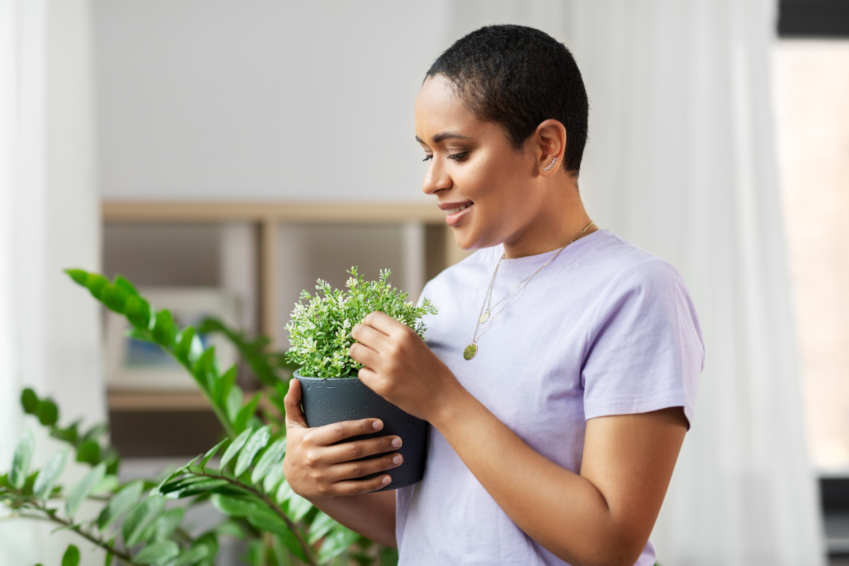 17 Tips for Finding Your Perfect Plant Match, According to Apartment Therapy Readers