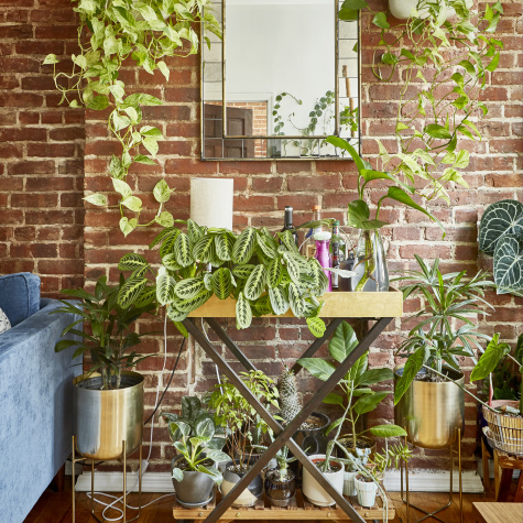 100+ Plants Fill a Beautiful, Brick-Walled 600-Square-Foot NYC Rental Apartment
