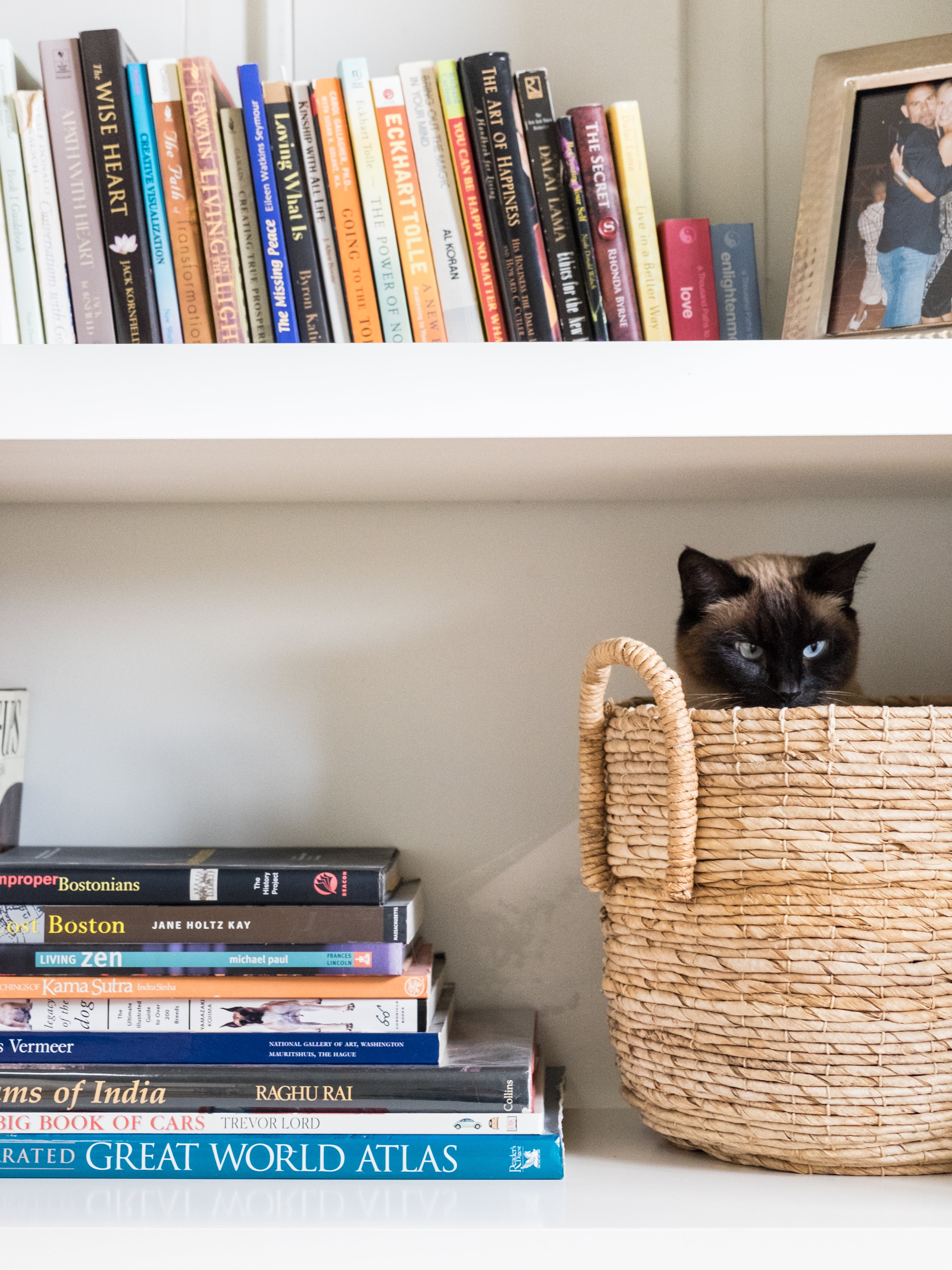 How To Make A Small Apartment More Fun For A Cat Apartment Therapy
