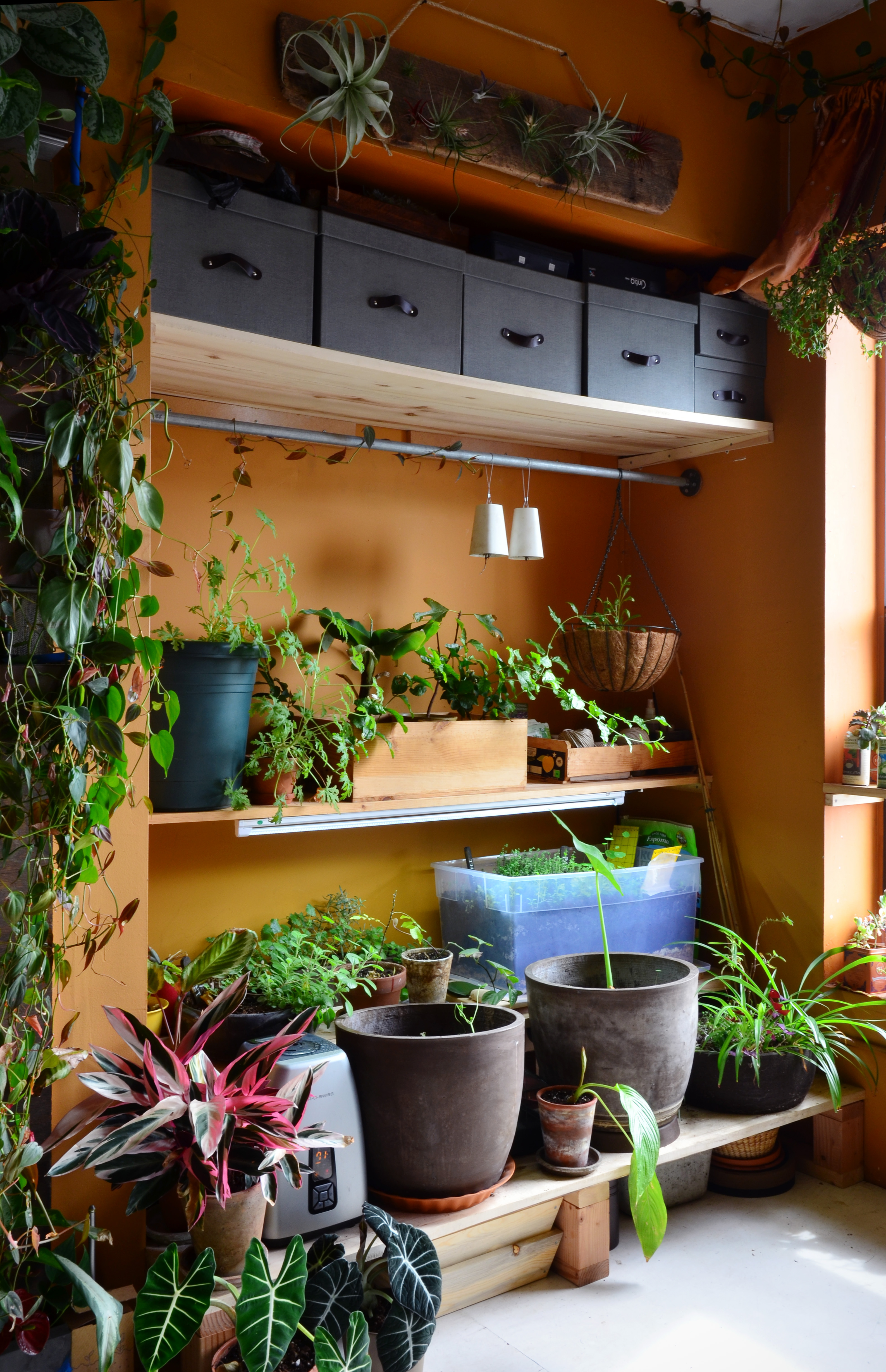 Twin Platform Bed Ikea, 15 Indoor Garden Ideas How To Make A Garden Inside Your Home Apartment Therapy