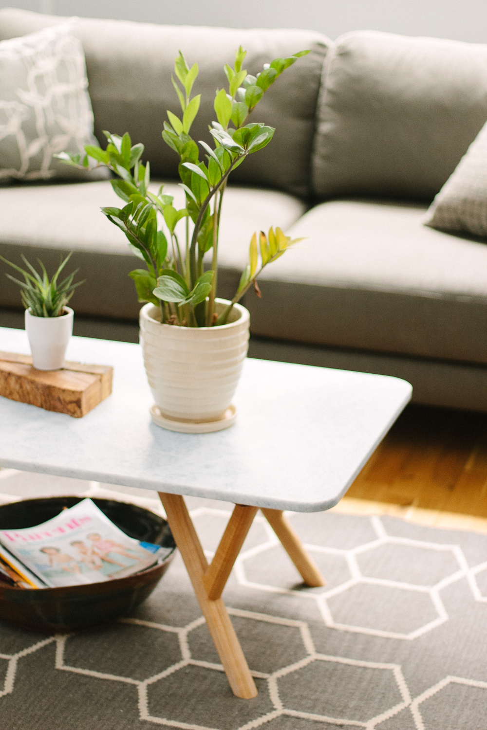 Zz Plant Care How To Grow Maintain Zz Plants Apartment Therapy