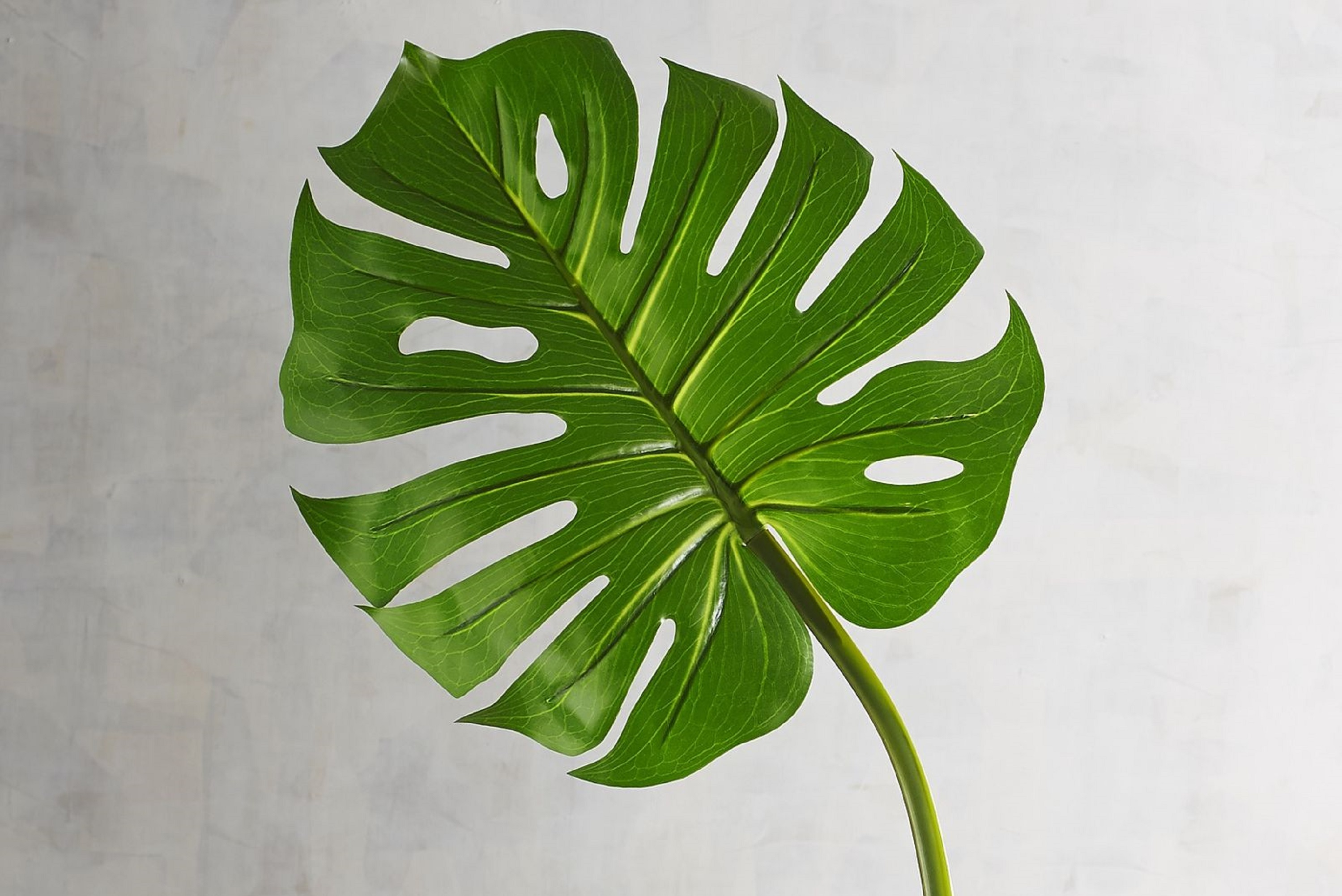 Monstera Leaf Where To Buy Faux Cut Stems Apartment Therapy