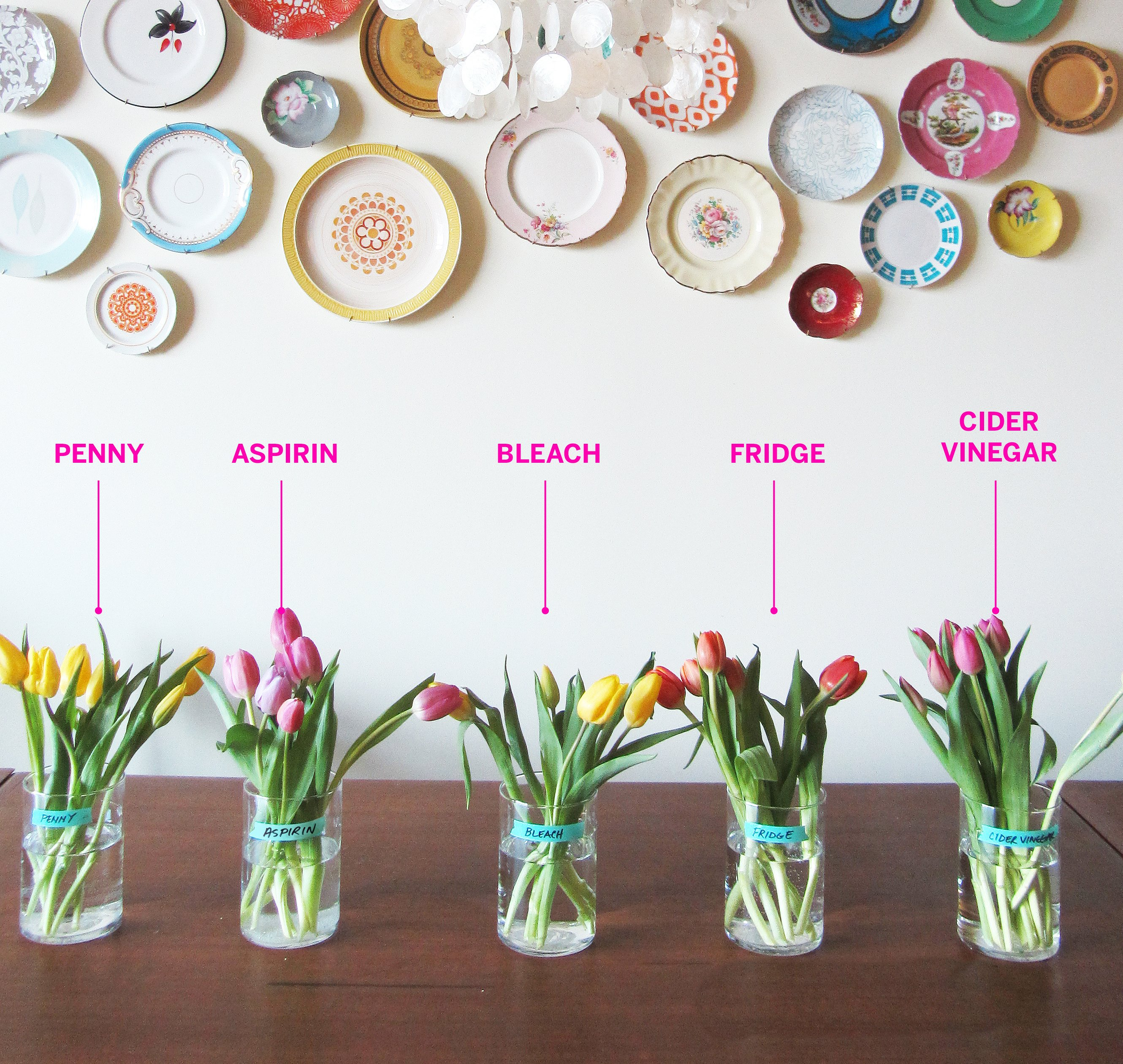 Test Lab The Best Way To Keep Flowers Fresh Apartment Therapy