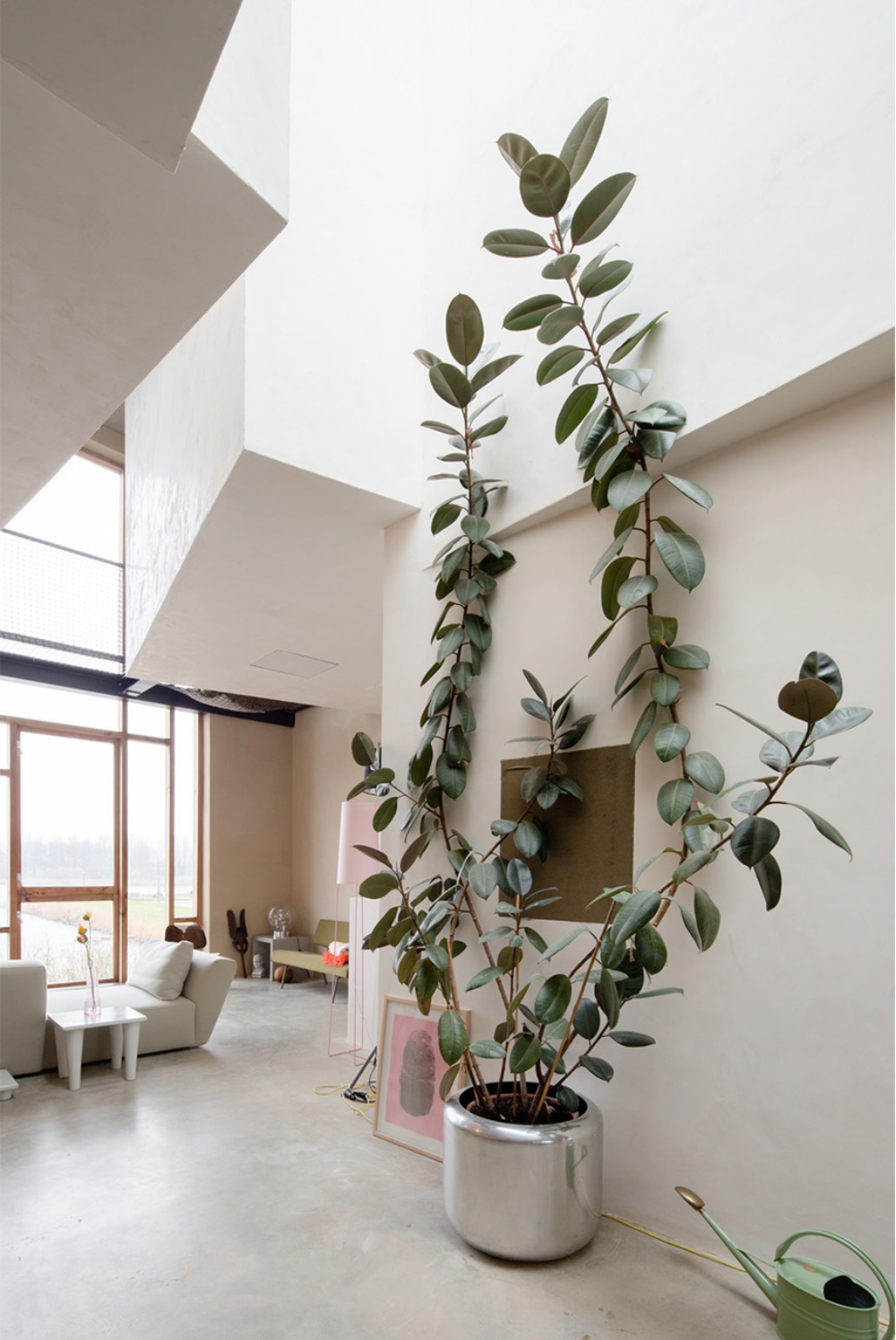 12 Best Indoor Trees Large Floor Plants For A Bold Statement Apartment Therapy