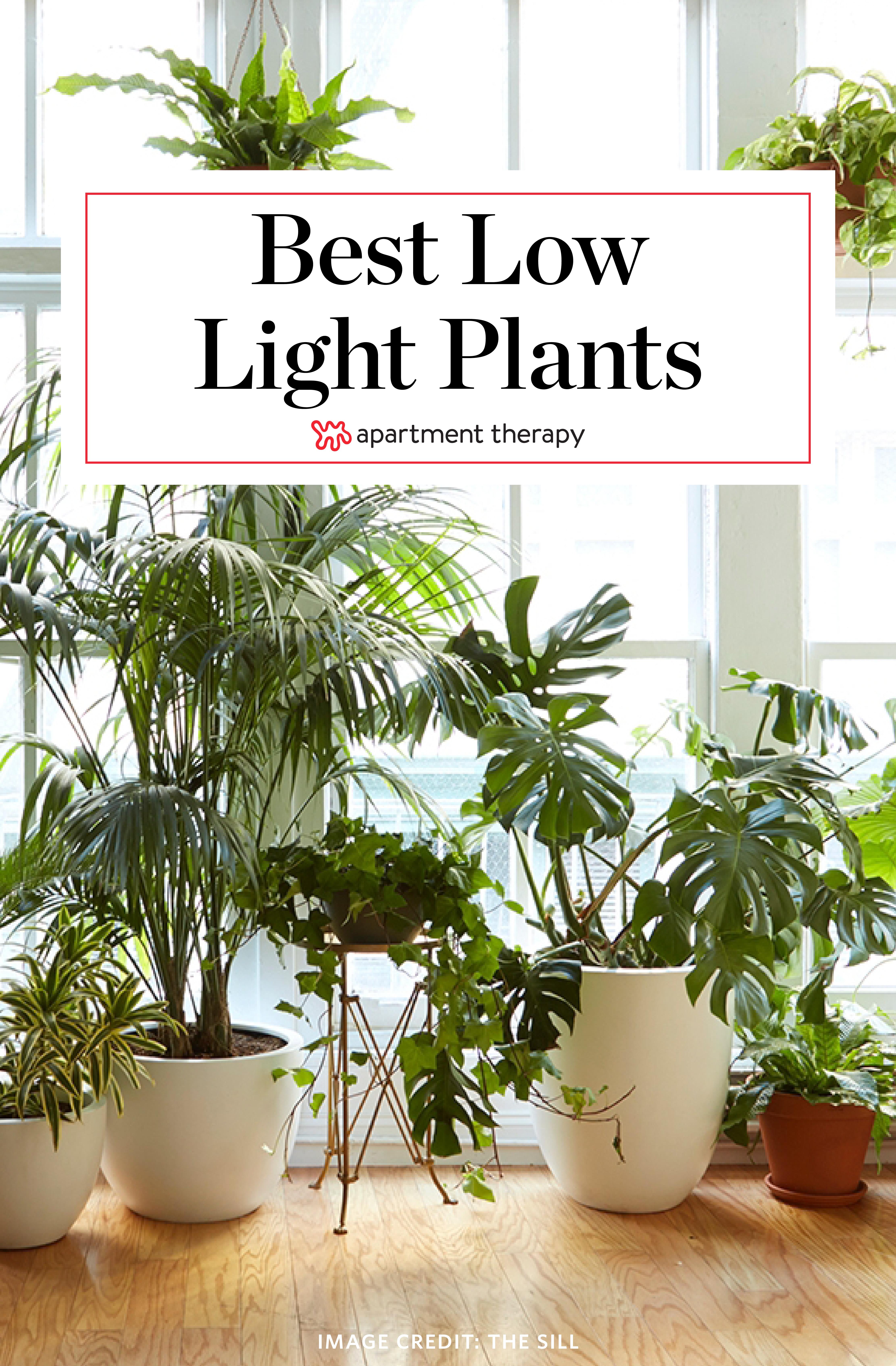 good low light plants