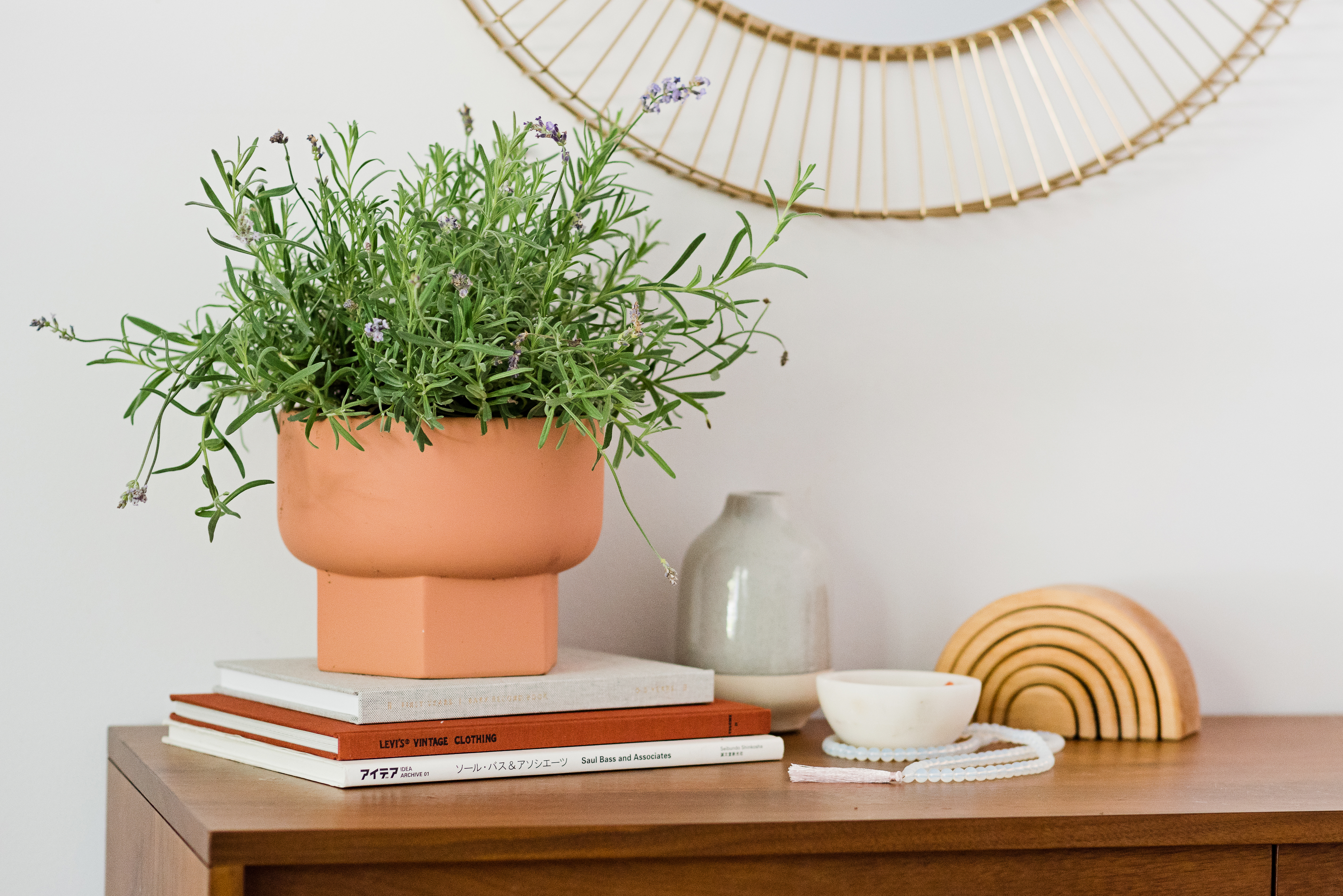 How To Grow Lavender Indoors Apartment Therapy