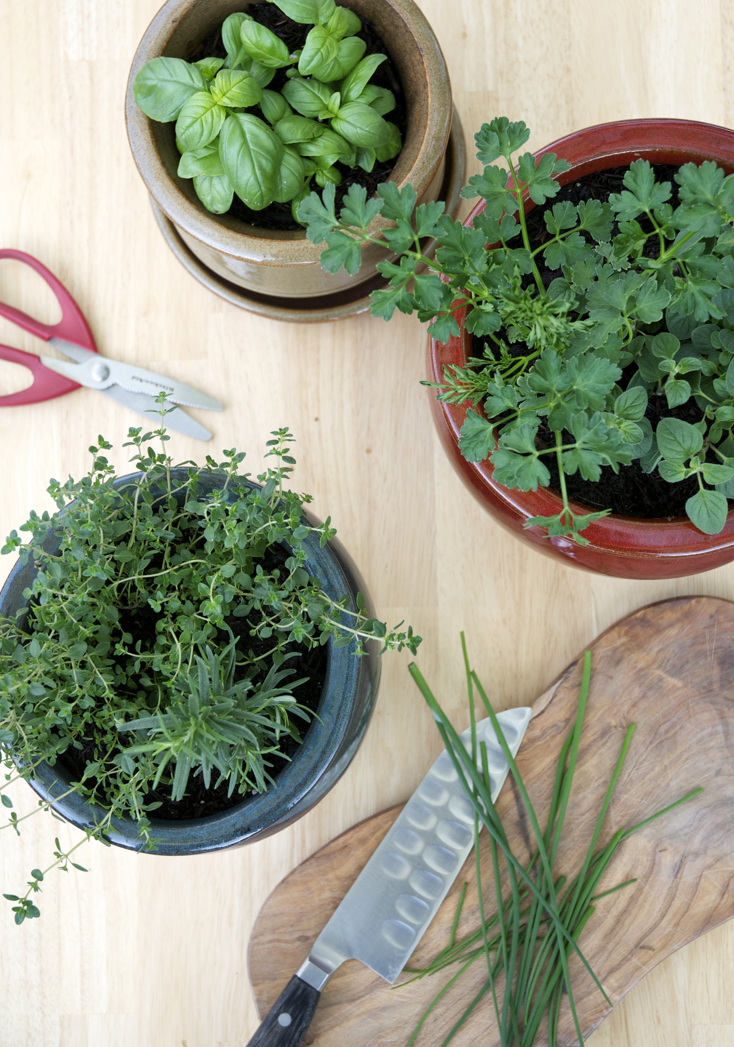 Tips For A Small Space Kitchen Herb Garden Kitchn
