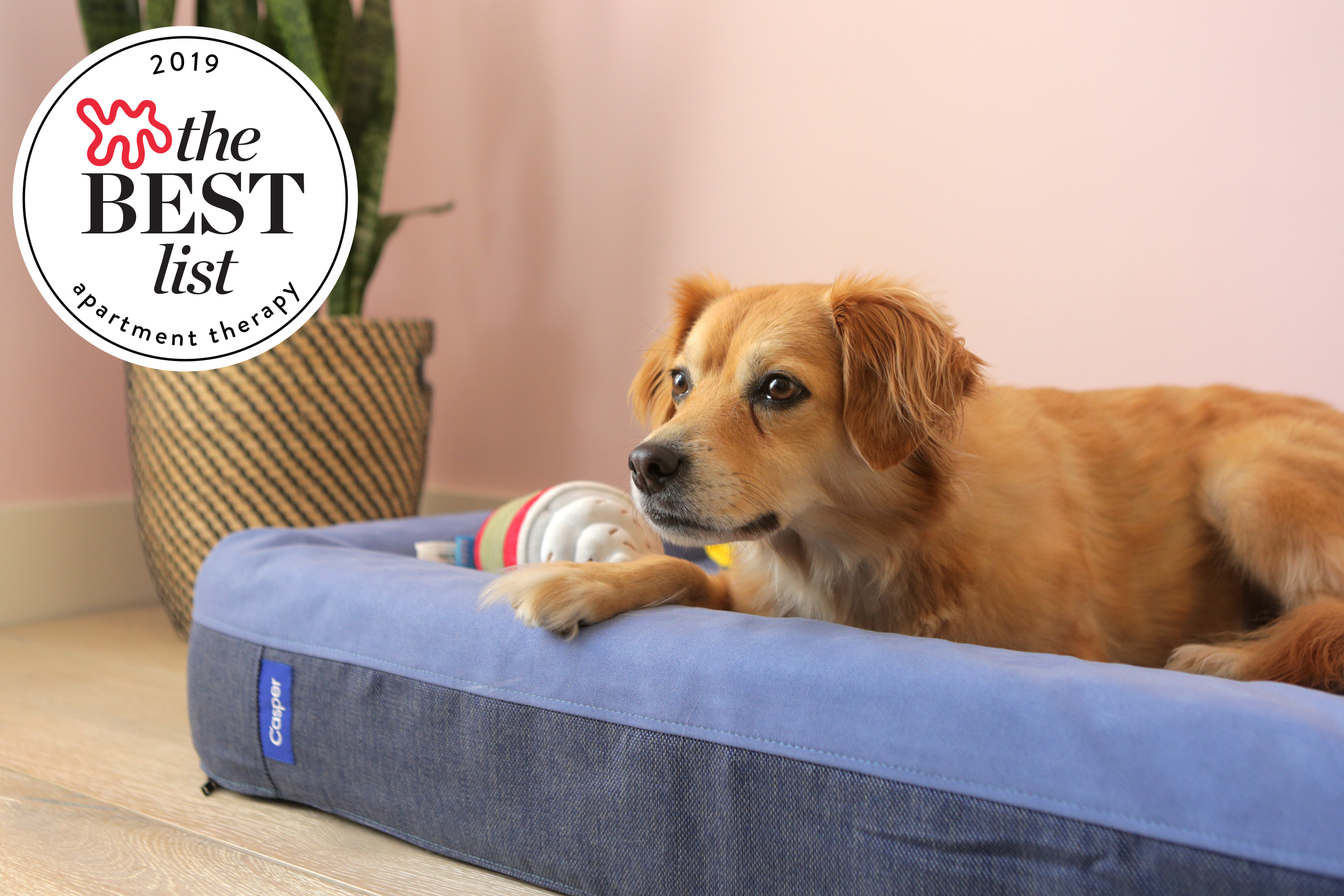 The Best Stylish Dog Beds Of 2019 Apartment Therapy
