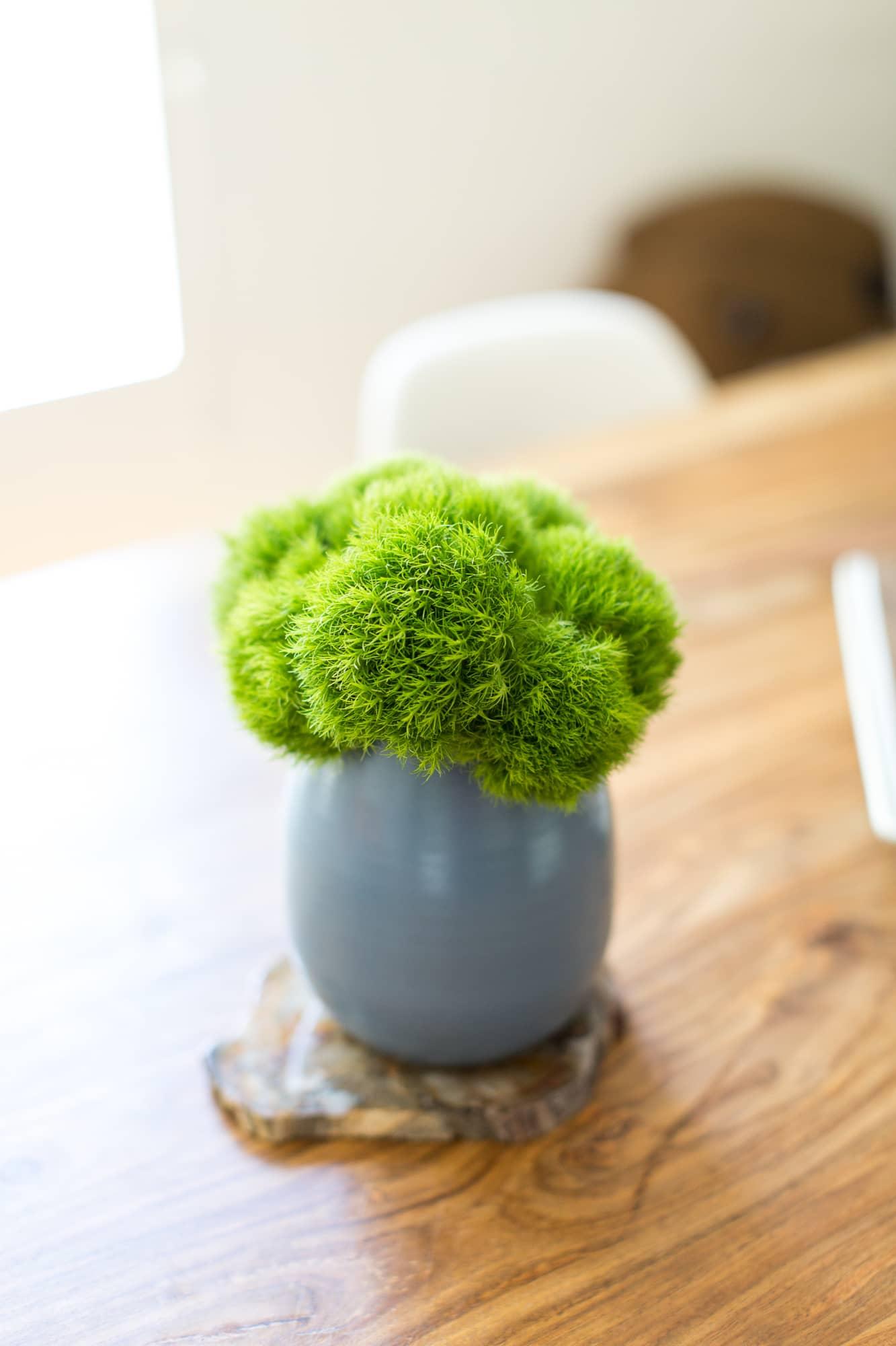 moss indoors