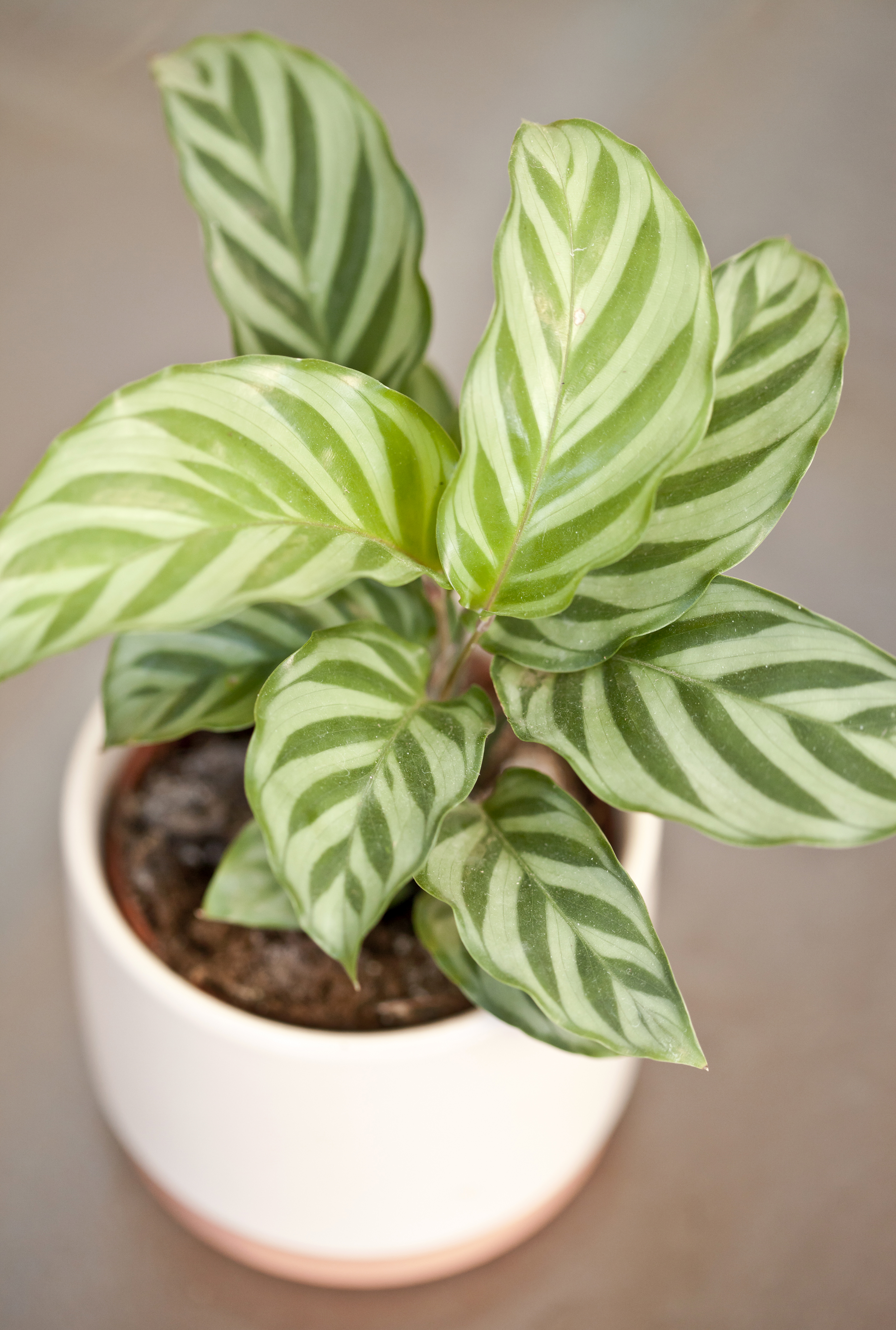 20 Best Bathroom Plants   Houseplants for Warm, Humid Spaces ...