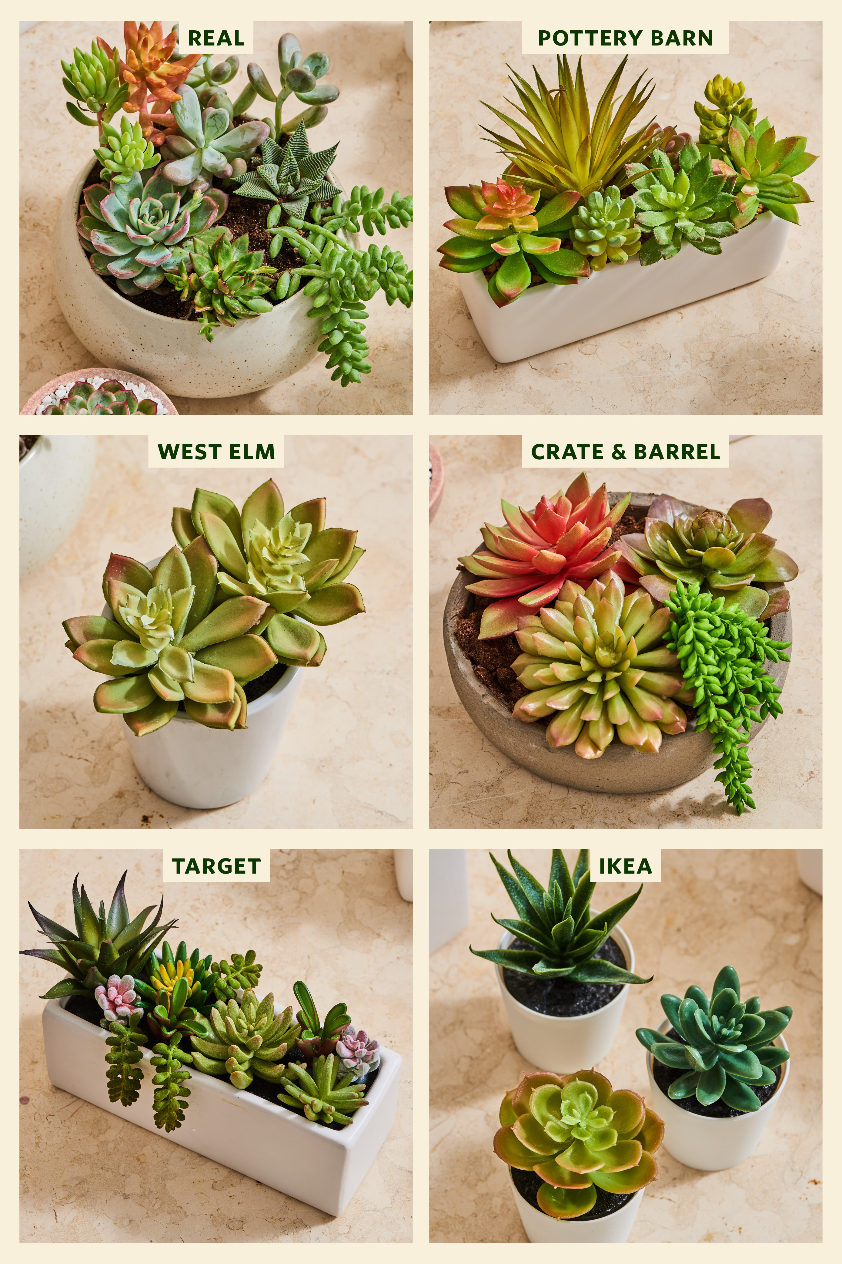 The Best Fake Succulents Ikea Target 3 Others Apartment Therapy